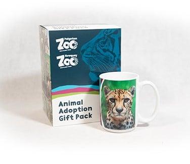 Cheetah adult adoption box