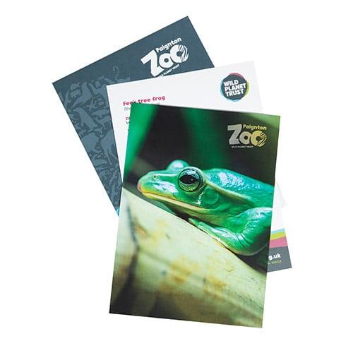Tree frog standard adoption pack