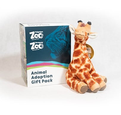 Giraffe junior adoption box