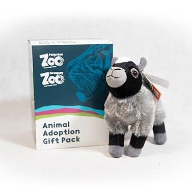 Goat junior adoption box