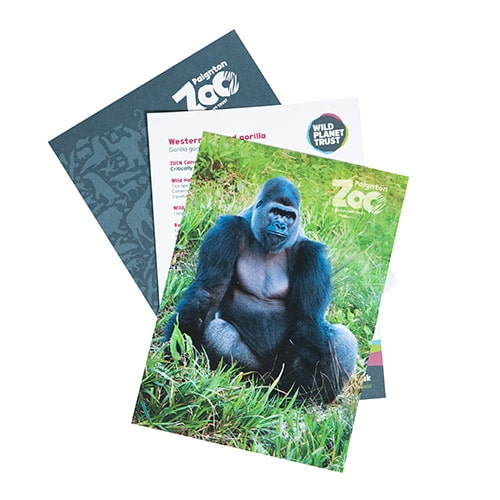 Gorilla standard adoption pack