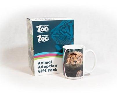 Lion adult adoption box