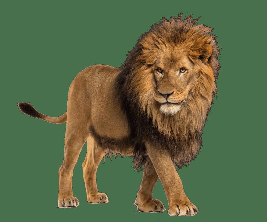 Lion Transparent