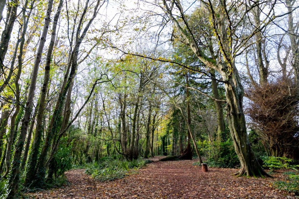 Primley Park treescape