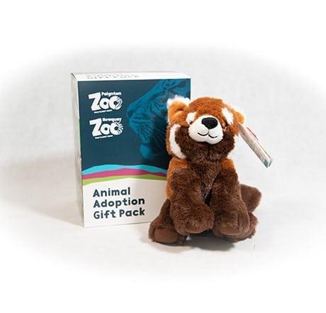 Red panda junior adoption box with Toy