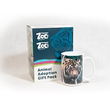 Tiger adult adoption box