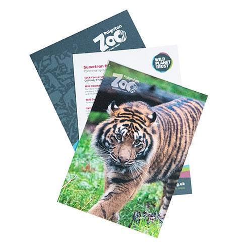 Tiger standard adoption pack