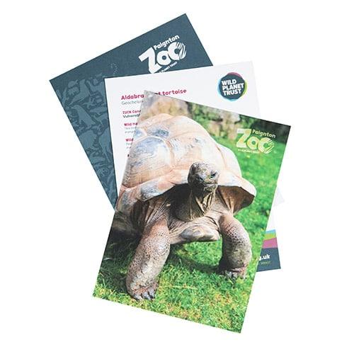 Giant tortoise standard adoption pack