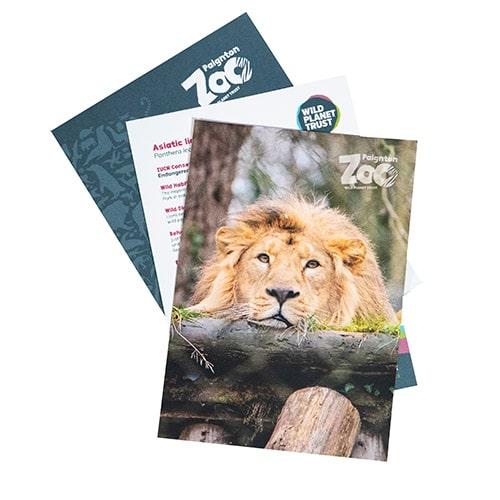 Lion standard adoption pack