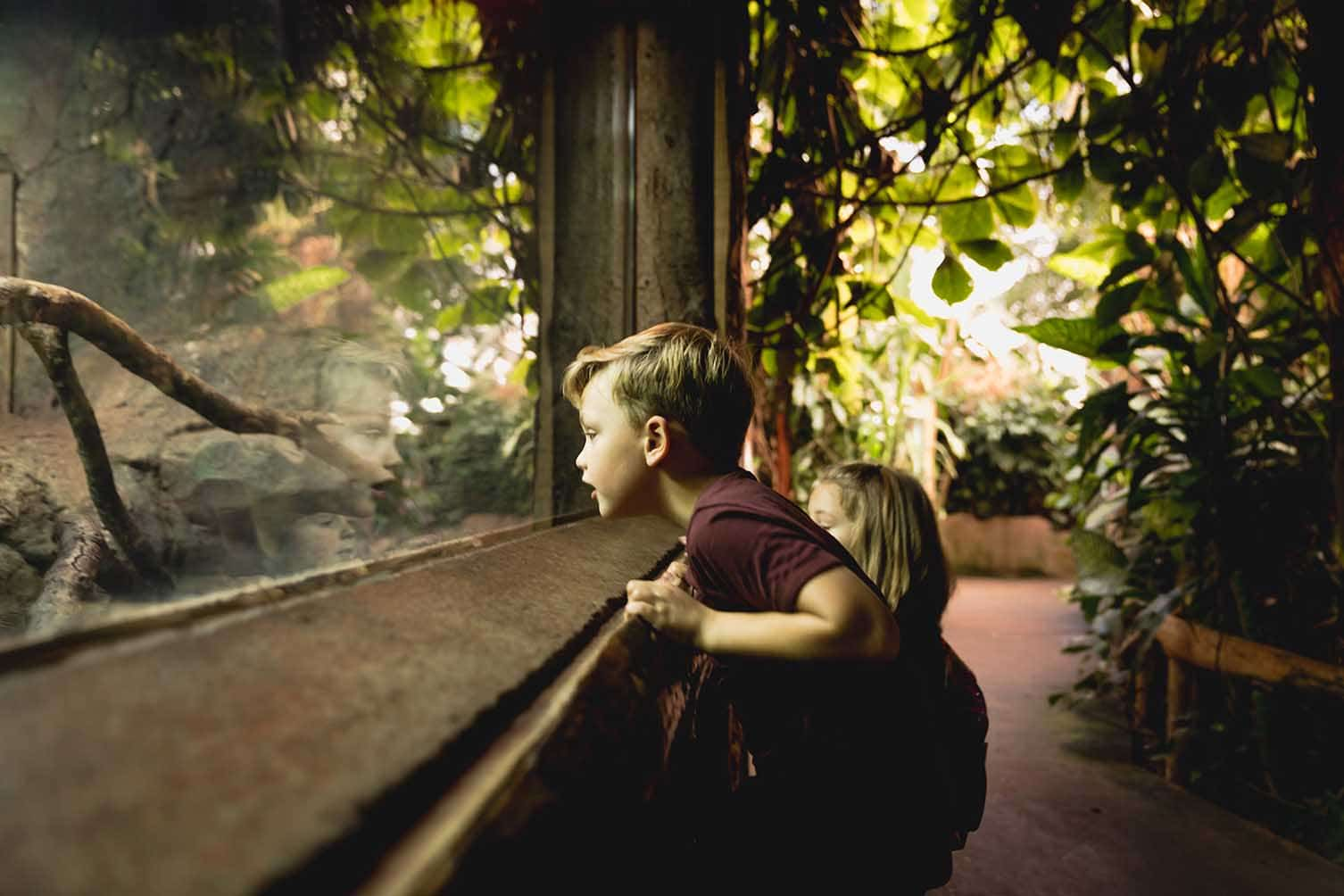 Child looking at exhibit in Tropical Trails at Paignton Zoo