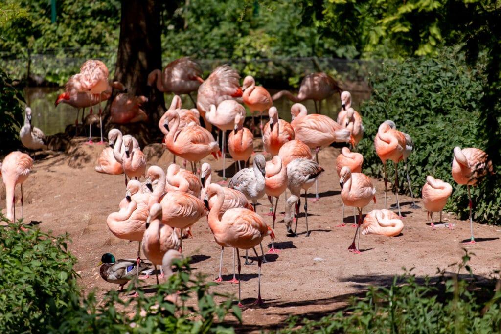 Flamingos 05.2019 LR 123