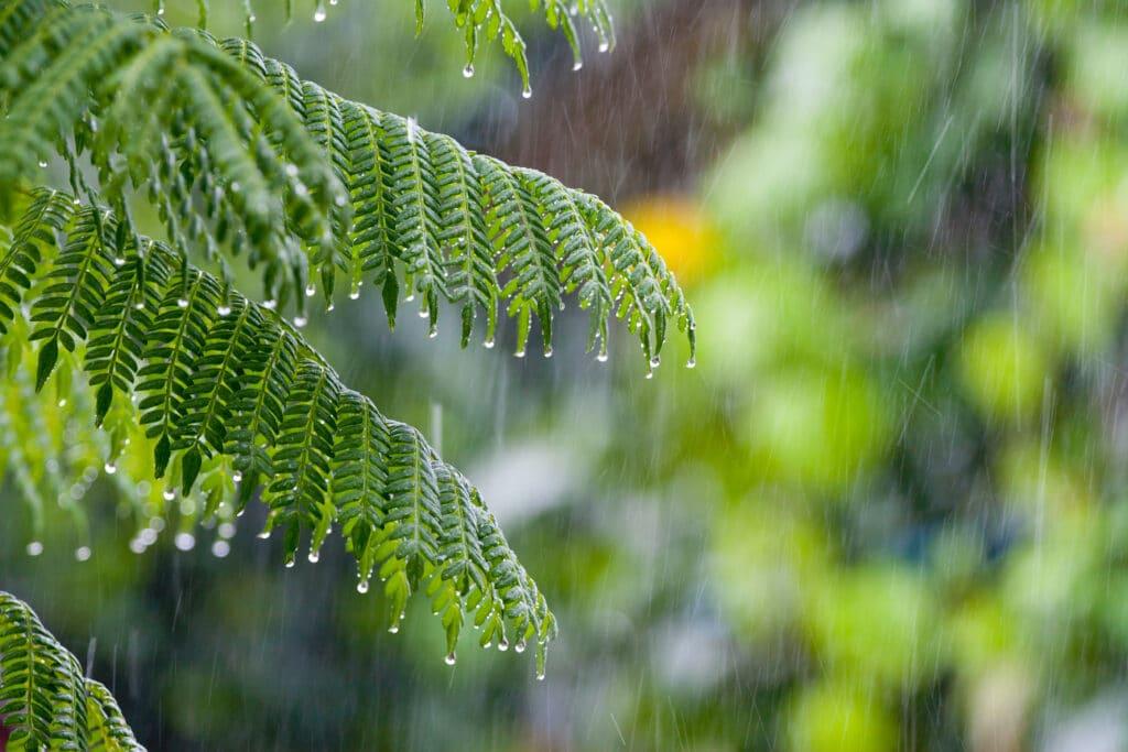 Lush green branch, wet from rainfall.