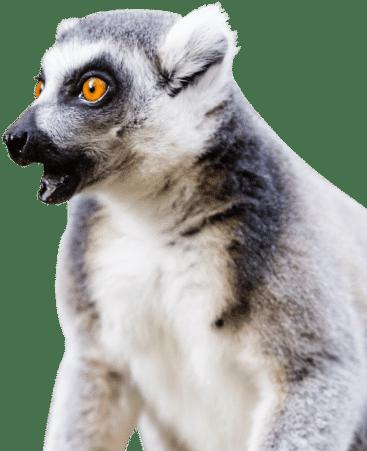 PZ Lemur e1620227200195 1