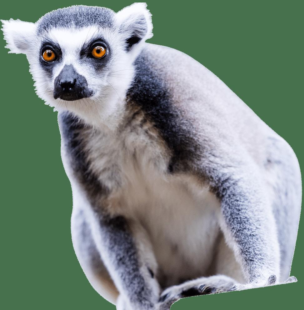 PZ Lemur1 1