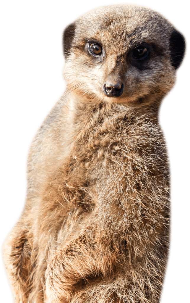 PZ Meerkat
