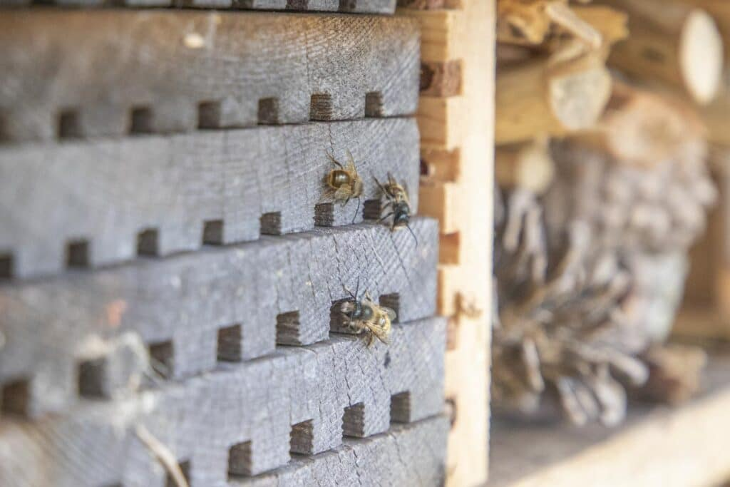 Bees using new bee hotel at Paignton Zoo