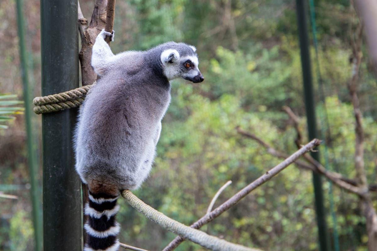 PZ Lemurl Xmas Enrich 12 20 ONB LR 15