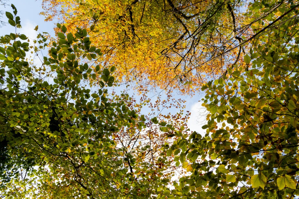 Treescape at Primley Nature Reserve, Paignton