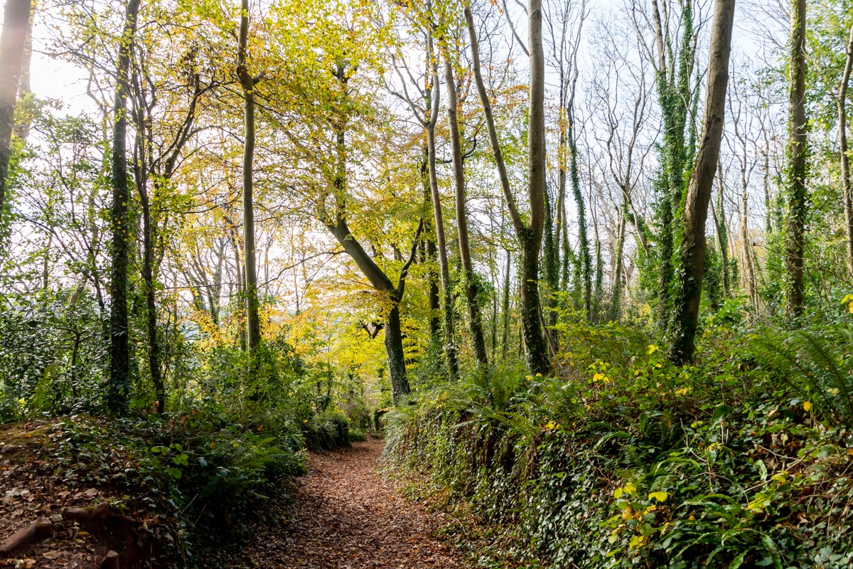 Forest at Primley Park, Paignton