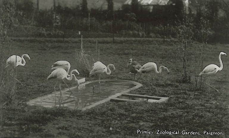 Primley Zoological Gardens postcard from 1940s