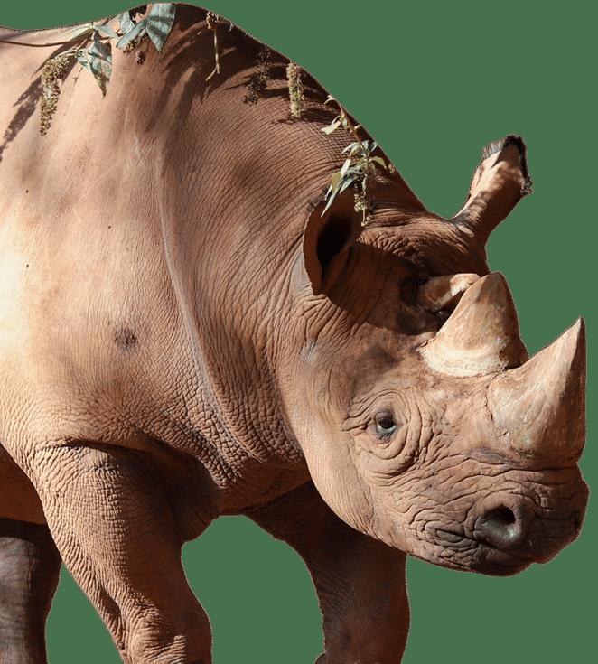 pz rhino 3