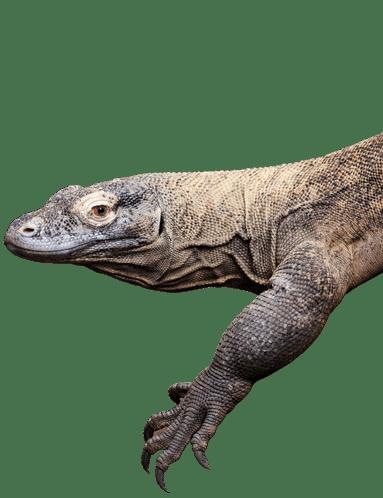 PZ Komodo Dragon 2