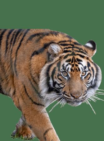 PZ Tiger 1 e1625158361306